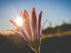 2021-blog-image-Apr7-Blooming flower2